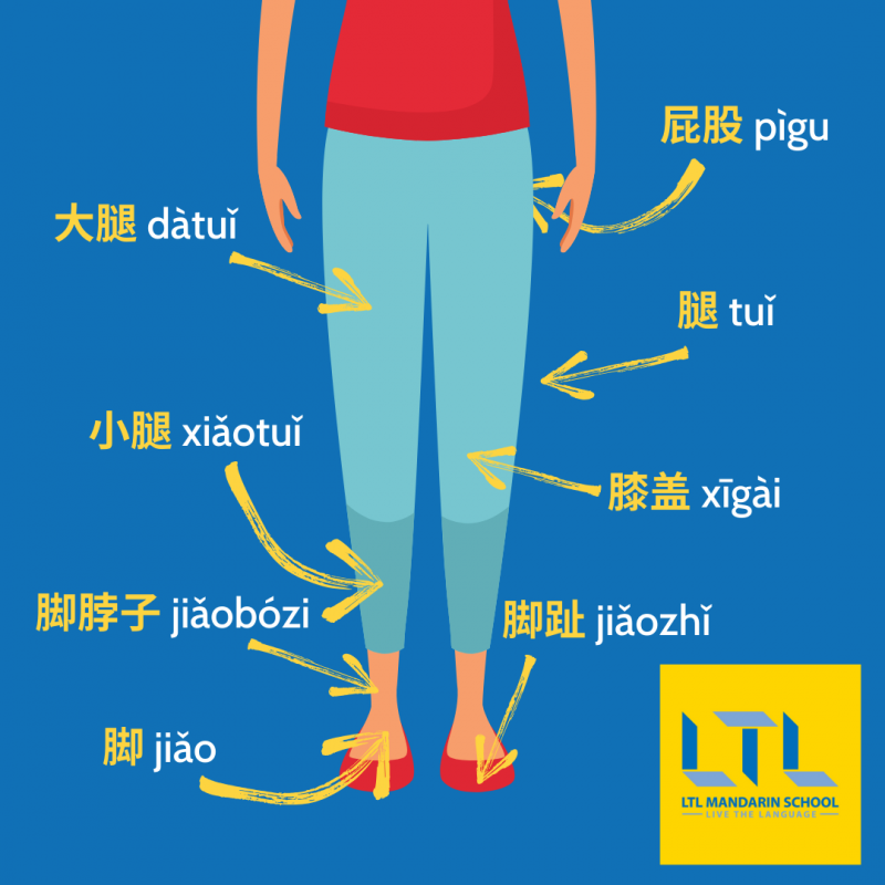 Body Parts in Chinese - Lower Body