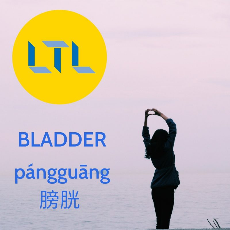 Body Parts in Mandarin - Bladder