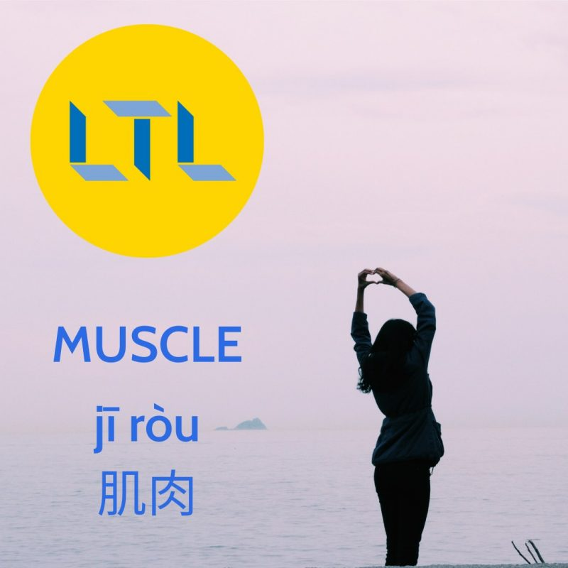 Body Parts in Chinese - Muscle