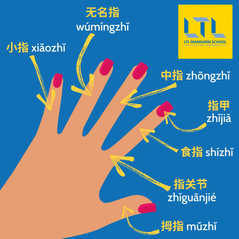 Body Parts in Chinese - Your Hand