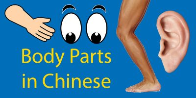 Body Parts in Chinese – From Head to Toe